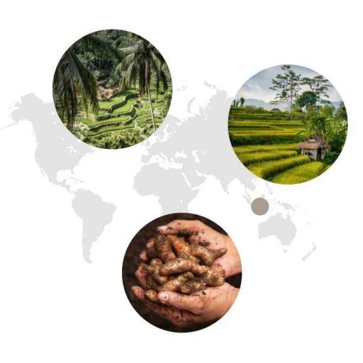 Ursprungsgebiet von Curcuma auf der Weltkarte: Indien