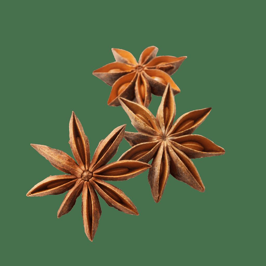 Sternanisfrüchte