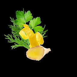 Smoothie Avocado Celery